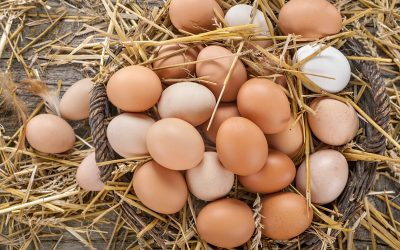 1 Dozen Large Free Range Eggs